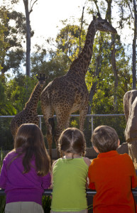 Kids Watching Giraffes -Courtesy San Diego Zoo